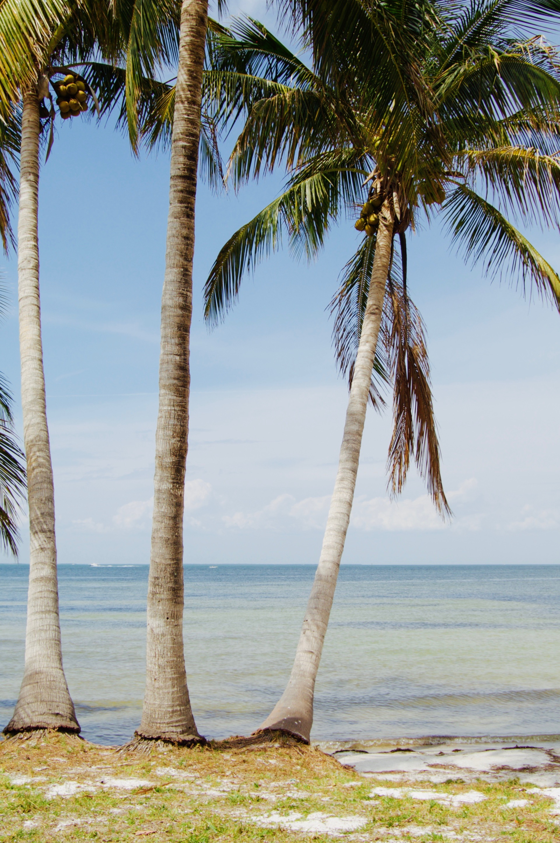 Bokeelia Beach And Palms